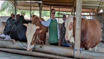 Kisah Sukses Peternak Sapi, Berawal dari Jarang Makan Daging