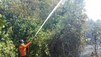 Lahan Sepanjang Jalan Desa Penyak Kembali Dilalap si Jago Merah