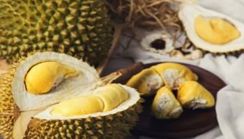 Luar Biasa! Kalahkan J-Queen, Harga Durian Tai Babi Capai Rp 50 Juta