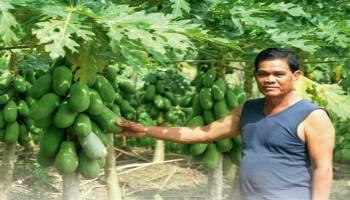 Mantan Wakil Bupati Jadi Petani Sukses