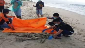 Mayat Laki-Laki Tanpa Indentitas Ditemukan Dalam Keadaan Tidak Utuh di Pantai Gelam Tanjung Berikat Desa Beriga