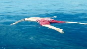 Mayat Tanpa Kepala Ditemukan Mengapung di Tengah Laut