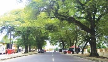 Menanti Perda Izin Menebang Pohon
