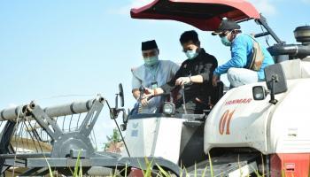 Menteri Pertanian RI Ikut Panen Raya di Desa Rias Toboali
