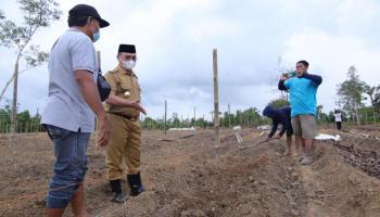 Pacu Ekspor Jahe Merah, Gubernur Erzaldi Siapkan Demplot