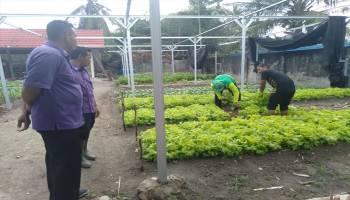 Pasien RSJ SungailaitRehabilitan Dibina Bertanam Sayuran