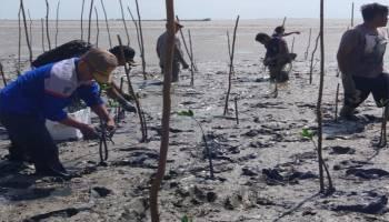 Peduli Lingkungan, DLH Bateng Tanam 1.080 Bibit Mangrove di Kawasan Wisata Pantai Kayu Besi