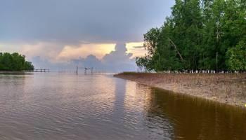Pemdes Kota Waringin Akan Kelola Hutan Mangrove Jadi Objek Wisata