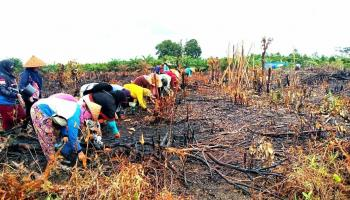 Pemdes Pangkal Buluh Galakkan Program Pemberdayaan Masyarakat Untuk Ketahanan Pangan