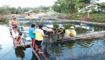 Pemkab Bateng Budi Daya Ikan di Kolong Eks Tambang