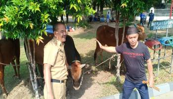 Bersama Jurnalis, Pemkot Pangkal Pinang Potong 5 Ekor Sapi