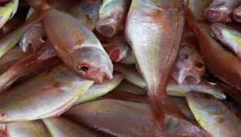 Pengendalian Fluktuasi Ikan Segar Perlu Mendapat Perhatian Bersama