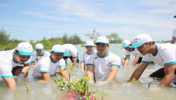 Peringati Hari Menanam Pohon Indonesia, PLN Babel Tanam 5.100 Pohon