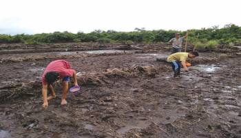 Pertanian dan Perkebunan Pilar Ekonomi Desa Rukam