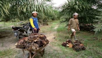 Pertanian Menjadi Motor Perekonomian Desa Celuak