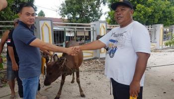 Perusahaan Tambak Udang Tanjung Langka Salurkan 3 Ekor Sapi Kurban
