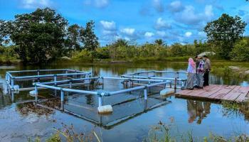 Pesantren Ibnu Sabil Cambai Budi Daya Ikan Air Tawar di Kolong Bekas Tambang