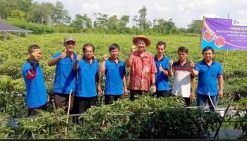 Petani Cabai Rasakan Manfaat Bantuan BI dan Pemkab Bateng