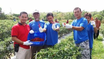 Petani Trubus Ikuti Bimtek GHP Cabai Merah