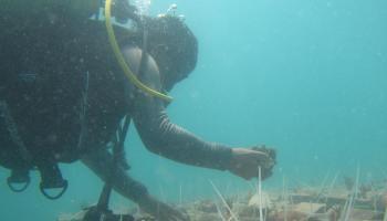 PT Timah Telah Tenggelamkan Ribuan Unit Artificial Reef di Laut Babel