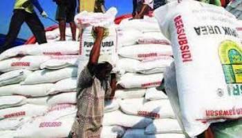 Pupuk Subsidi 64 Ribu Ton Siap Disalurkan ke Petani Babel