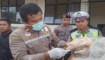 Ribuan Kilogram Telur Ayam dan Daging Sapi  Terjaring Operasi Patuh Karantina Pangkalpinang