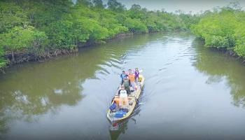 Sejuta Potensi Mangrove Sungai Kepoh