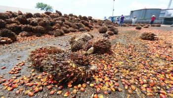 Sektor Pertanian Dorong Pertumbuhan Ekonomi Babel