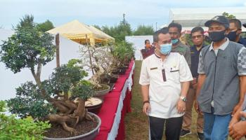 Semarakkan HUT Kota Pangkalpinang, PPBI Gelar Kontes Bonsai