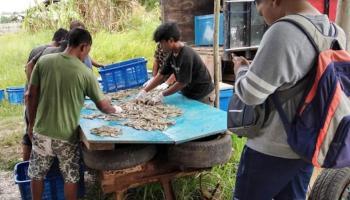 Suryanto Afong Belajar Otodidak Budi Daya Udang Vannamei Skala Rumah Tangga