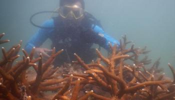 Tahun Ini PT Timah Sebar 995 Unit Arificial Reef di Laut Bangka