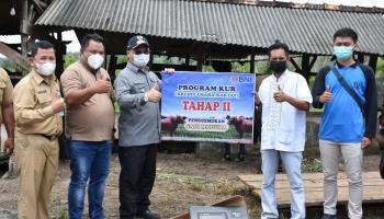 Target Swasembada Daging Sapi Bangka Belitung Optimis Terwujud
