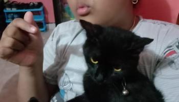 Tiga Hari Kucing Kesayangan Hilang, Pemilik Akan Lapor ke Polres Bangka Selatan