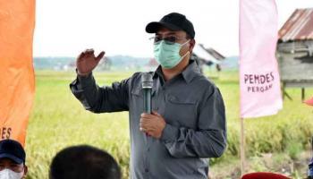 Tingkatkan Ketahanan Pangan, Program Food Estate Akan Dikembangkan di Desa Pergam