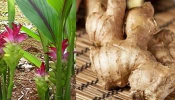 Tips Kesehatan: 6 Herbal Anti Kanker