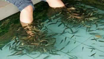 Tips Kesehatan: Banyak Digemari, Ternyata Ini 5 Manfaat Terapi Ikan Untuk Kesehatan