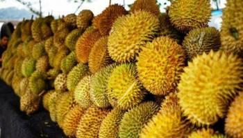 Tips Kesehatan: Doyan Makan Buah Durian? 7 Manfaat Ini yang akan Kamu Dapatkan!