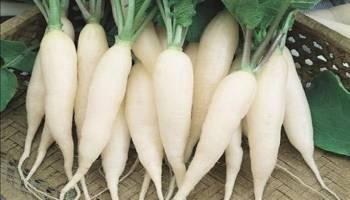 Tips Kesehatan: Ini Segudang Manfaat Lobak Putih untuk Kesehatan