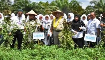 Usai Panen Kacang, Gubernur Siapkan Masterplan Rp 1 Miliar untuk SMKN 1 Pulau Besar Bangka Selatan