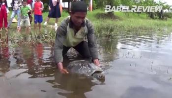 VIDEO Kura-kura Langka Dilepasliarkan di Sungai Upang, Ada yang Berusia 30 Tahun