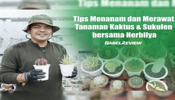Video Tips Merawat Tanaman Kaktus & Sukulen Bersama Herbilya