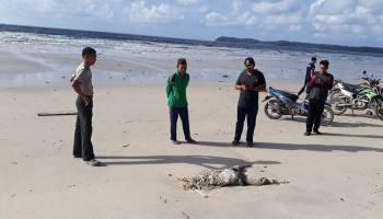 Warga Tanjung Labu Digegerkan Penemuan Mayat Tinggal Belulang