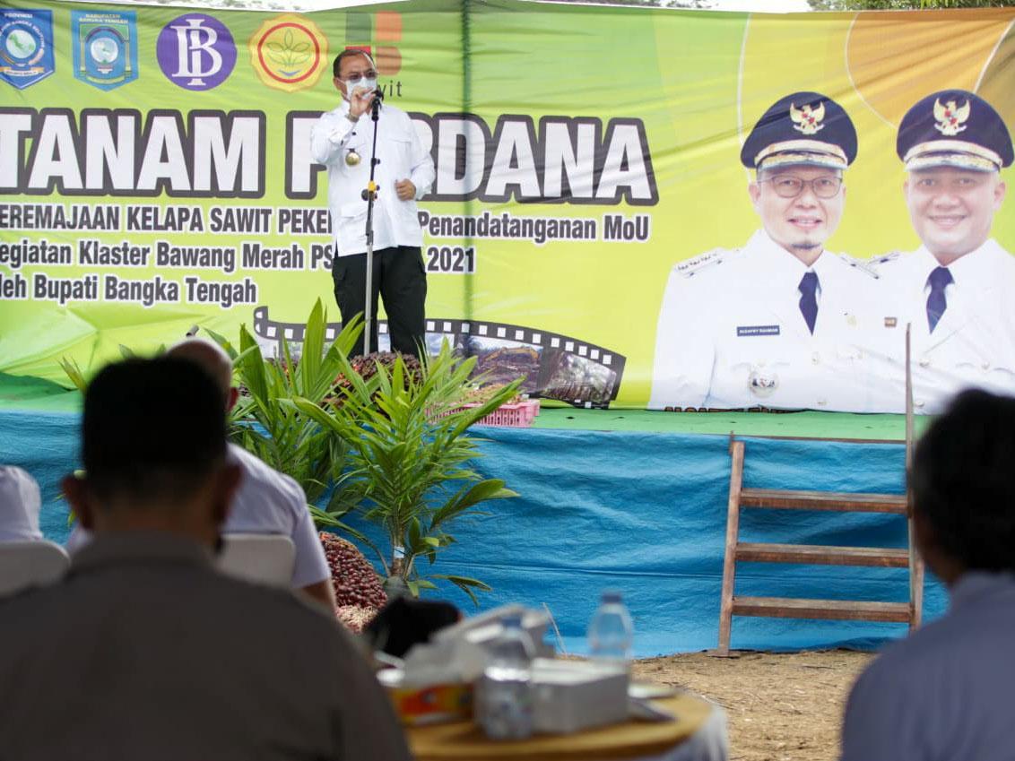 Tanam Bibit Sawit dan Jagung Pipil, Gubernur Minta Petani Jangan Andalkan Satu Komoditi