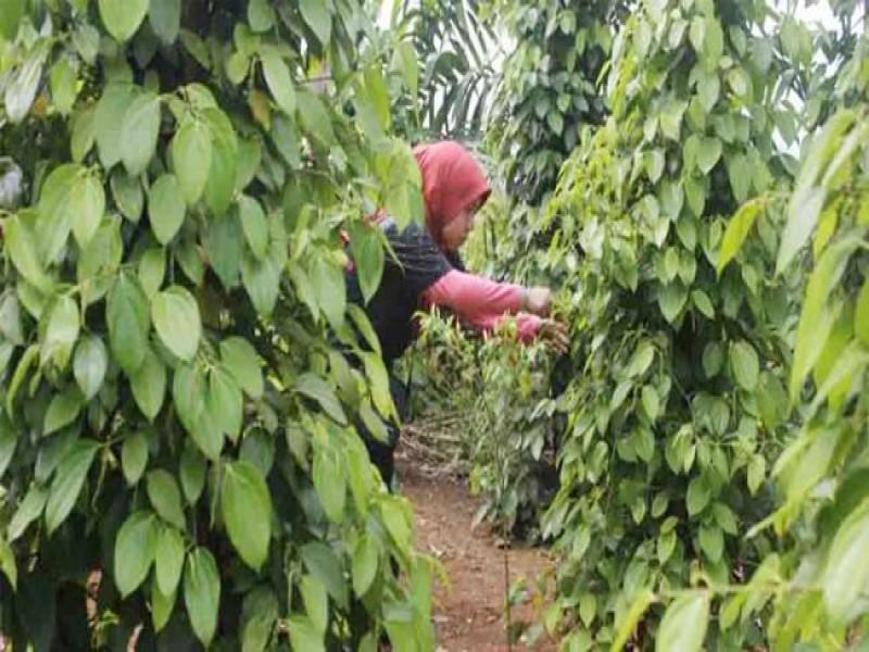 Triwulan III Pertumbuhan Ekonomi Babel Tertinggi di Sumatera