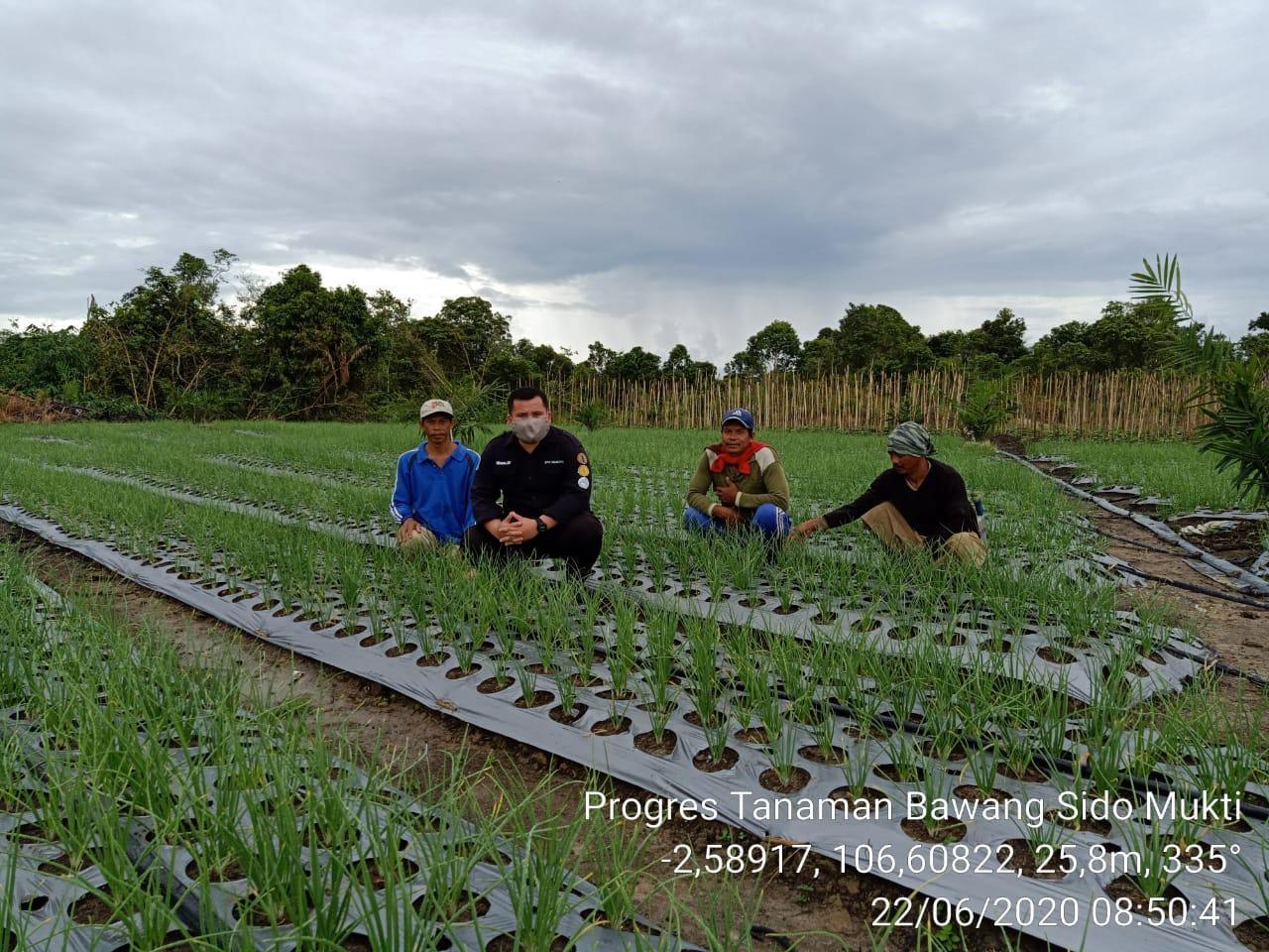Wujudkan Sentra Holtikultura di Bateng, Pemdes Lubuk Pabrik dan Penyuluh Fokus Pembinaan Poktan
